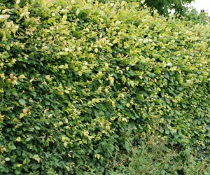 Home-quick-link-hedges